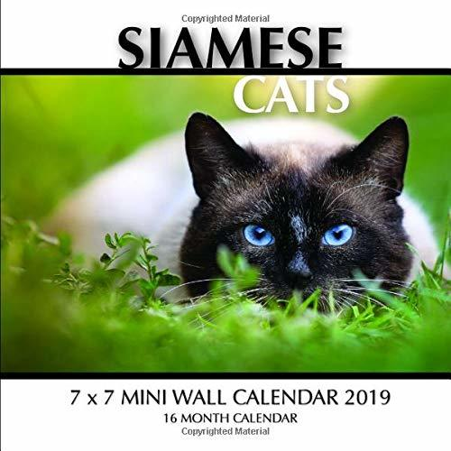 Siamese Cats 7 x 7 Mini Wall Calendar 2019: 16 Month Calendar
