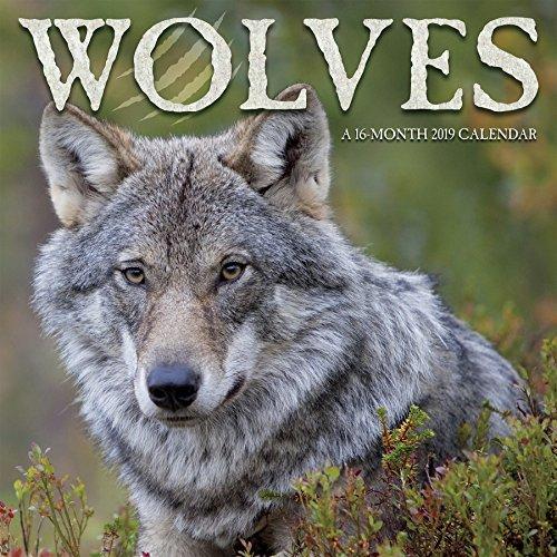 2019 Wolves Wall Calendar