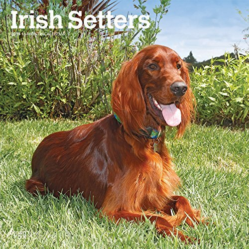 Irish Setters 2019 Square Wall Calendar