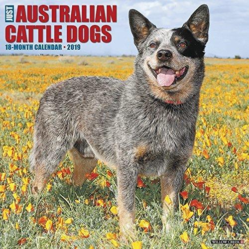 Just Australian Cattle Dogs 2019 Wall Calendar