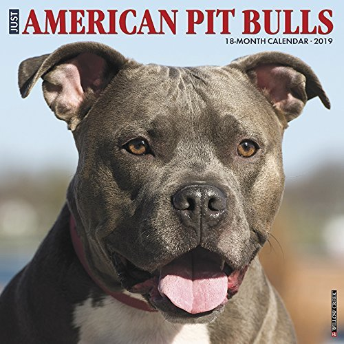 Just American Pit Bull Terriers 2019 Wall Calendar