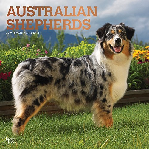 Australian Shepherds 2019 12 x 12 Inch Monthly Square Wall Calendar with Foil Stamped Cover, Animals Dog Breeds