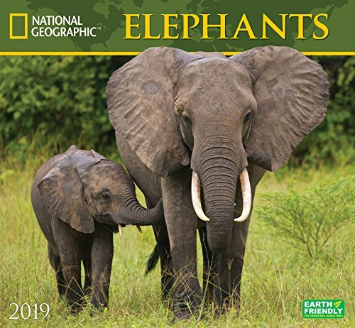National Geographic Elephants 2019 Wall Calendar