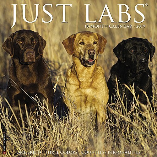 Just Labs 2019 Wall Calendar
