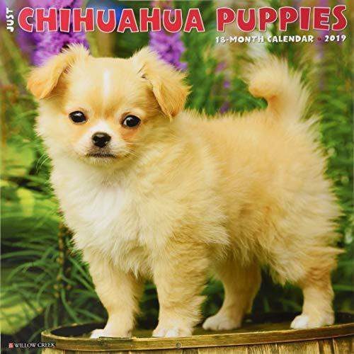 Just Chihuahua Puppies 2019 Wall Calendar