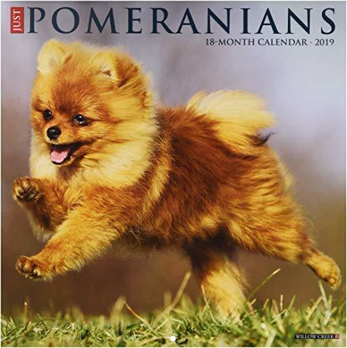 Just Pomeranians 2019 Wall Calendar