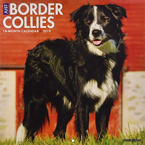 Just Border Collies 2019 Wall Calendar