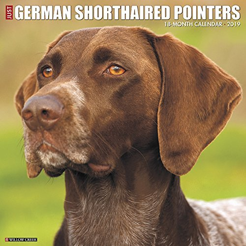 Just German Shorthaired Pointers 2019 Wall Calendar