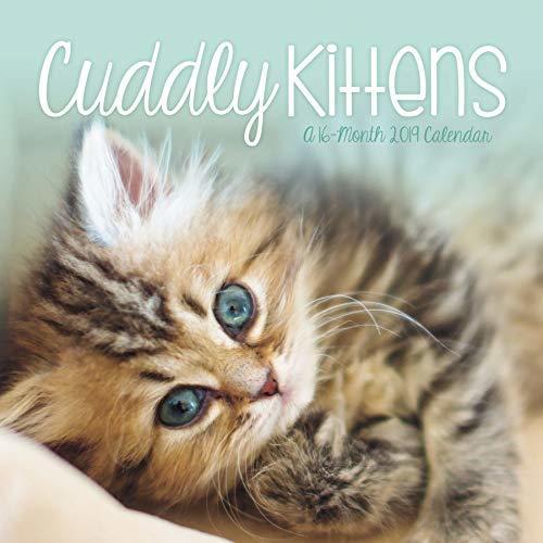 2019 Cuddly Kittens Wall Calendar