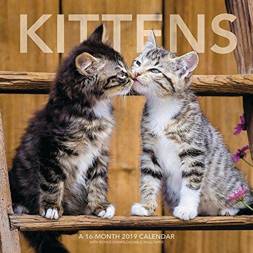 Kittens Wall Calendar (2019)