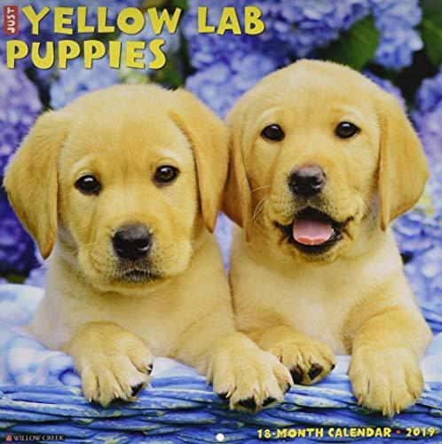Just Yellow Lab Puppies 2019 Wall Calendar