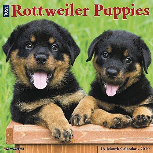Just Rottweiler Puppies 2019 Wall Calendar