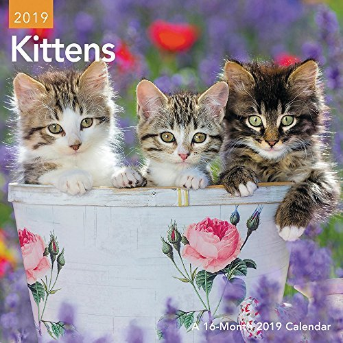 Kittens Mini Wall Calendar (2019)