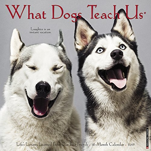 What Dogs Teach Us Mini 2019 Wall Calendar