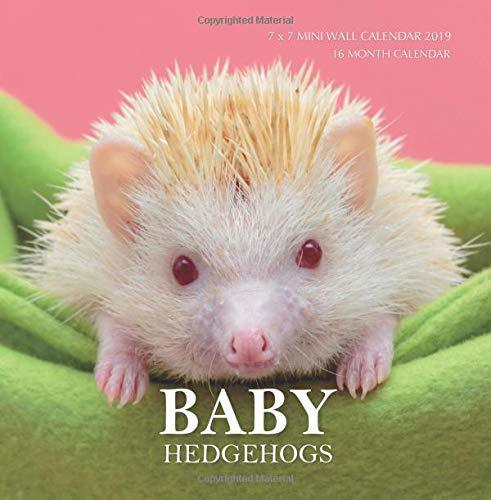 Baby Hedgehogs 7 x 7 Mini Wall Calendar 2019: 16 Month Calendar