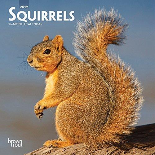 Squirrels 2019 7 x 7 Inch Monthly Mini Wall Calendar, Wildlife Domestic Animals