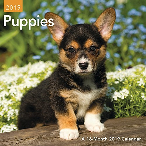 Puppies Mini Wall Calendar (2019)