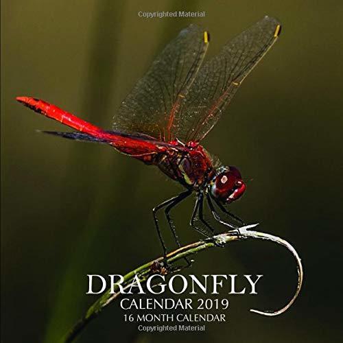 Dragonfly Calendar 2019: 16 Month Calendar