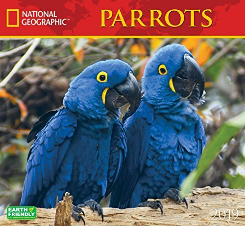 National Geographic Parrots 2019 Wall Calendar