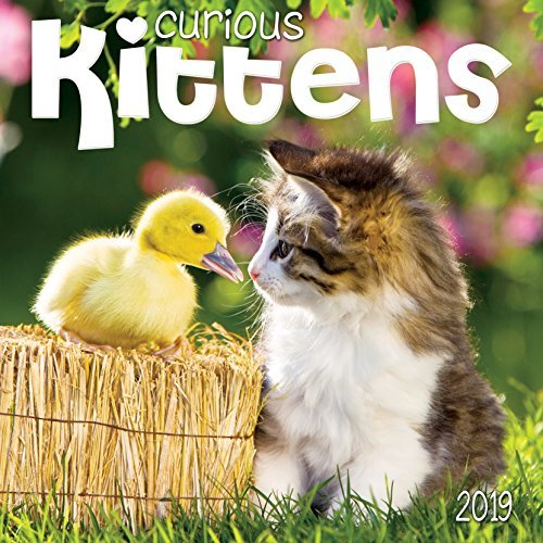 Curious Kittens 2019 Wall Calendar