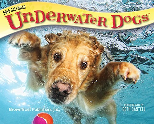 Underwater Dogs 2019 6.125 x 5.125 Inch Box Calendar, Pet Humor Puppy Art