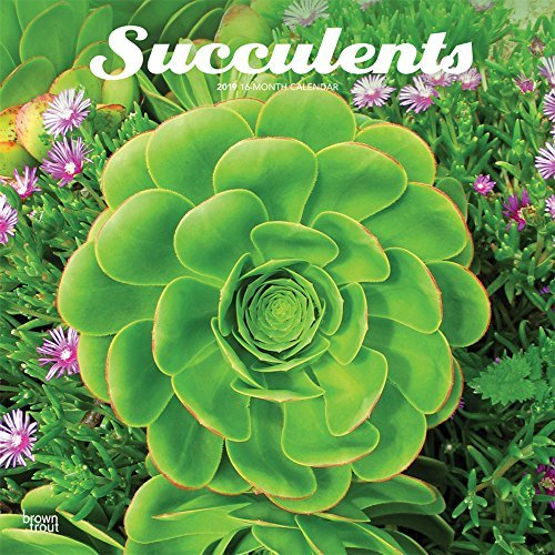Succulents 2019 12 x 12 Inch Monthly Square Wall Calendar, Plant Garden Agriculture