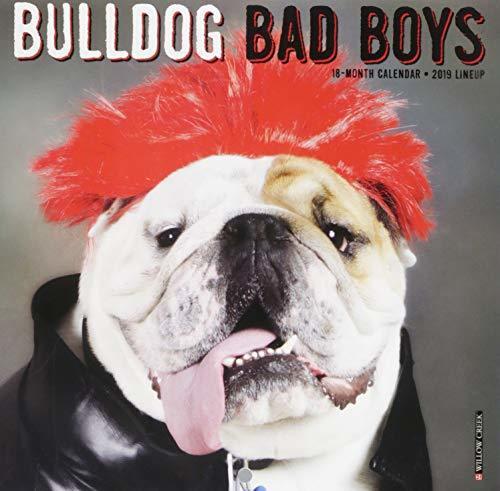 Bulldog Bad Boys Mini 2019 Wall Calendar