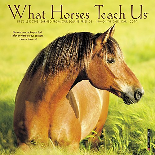 What Horses Teach Us Mini 2019 Wall Calendar