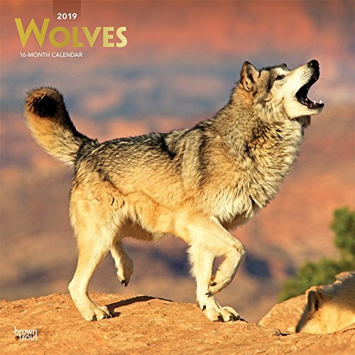 Wolves 2019 12 x 12 Inch Monthly Square Wall Calendar with Foil Stamped Cover, Wildlife Animals