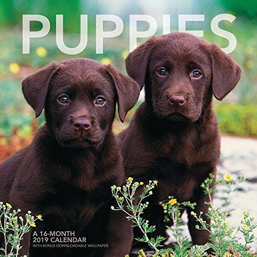 Puppies Wall Calendar (2019)