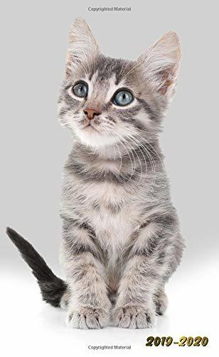 2019-2020: Nifty Little Grey Kitten Two-Year Monthly Pocket Planner with Phone Book, Password Log and Notebook. Cute Cats Small At A Glance Calendar, Organizer and Agenda.