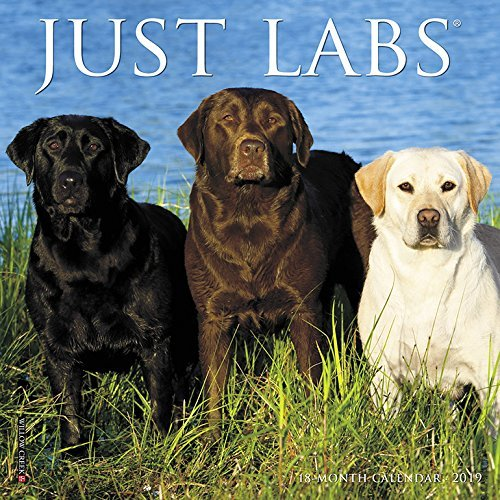 Just Labs Mini 2019 Wall Calendar