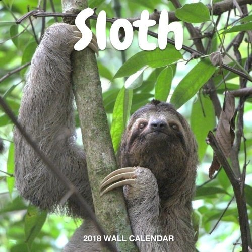 Sloth 2018 Wall Calendar: Sloth Photography, 8.5 x 8.5, Mini Calendar, Wall Calendar (New Years Gift Idea)