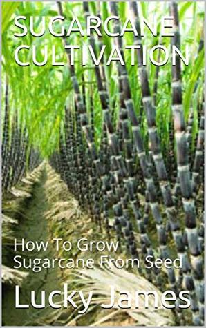 SUGARCANE CULTIVATION: How To Grow Sugarcane From Seed