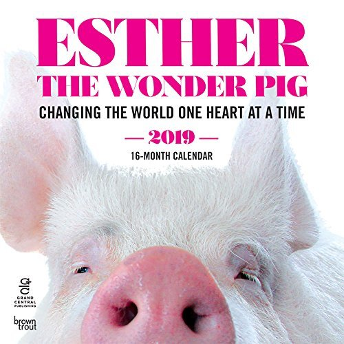 Esther the Wonder Pig 2019 12 x 12 Inch Monthly Square Wall Calendar by Hachette, Inspiration Motivation Designer Pig Animals