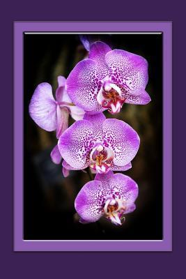 Orchids Notebook: Flower Notebook, Journal, Giftbook
