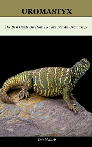 Uromastyx: The Best Guide On How To Care For An Uromastyx