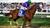 Racehorse RP