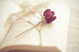 Reader's Paradise