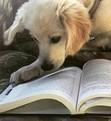 Dog Lovers Book Club