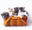 The Cat Corner =^._.^= ∫