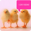 The Chicks have spoken