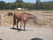 This is Buddy the horse I ride.
