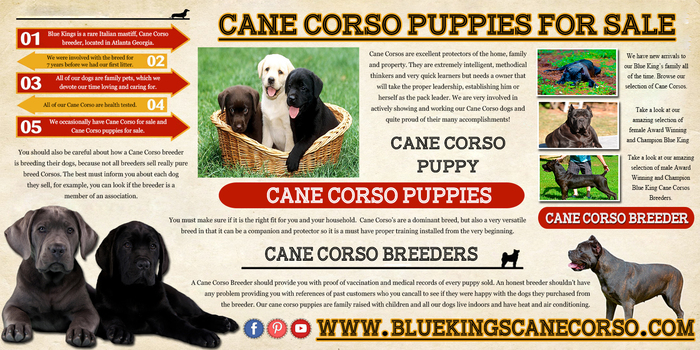 Visit this site http://www.bluekingscanecorso.com/ for more information on cane corso puppies. Cane Corso Puppies are loyal, friendly, and funny and they provide people of all ages the opportunities to learn and grow. The puppy should be outranked by all humans in the house. These puppies can make a great combination of family pet and protector with proper training and socialization. Follow Us : http://www.purevolume.com/canecorsopuppies