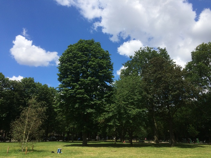 The trees in the Ranelagh Gardens