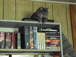 Sasha the Cat standing guard over some of Jamie's books.