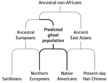 Four Population Ancestral Analysis
