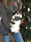 My kittttttty