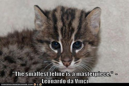 Quotes About Cats Unique Quotes About Cats 826 Quotes