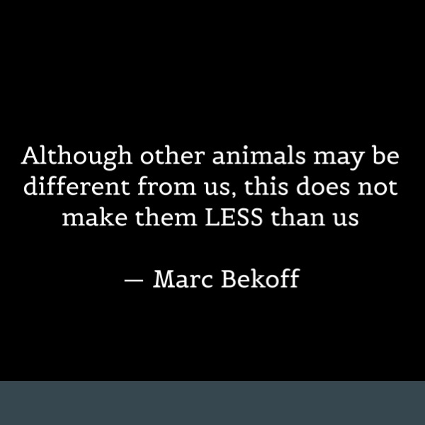 Animal Rights Quotes Simple Animal Rights Quotes 48 Quotes